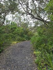 Rangitoto summit path: by thekiwireporter, Views[75]