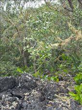 Rangitoto lush flora: by thekiwireporter, Views[67]