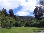 Rividell with the Christmas blossom of the Pohutukwa: by thekiwireporter, Views[82]