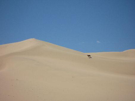 The Dunes at Khongoryn Els