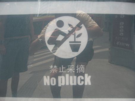 NO PLUCK!