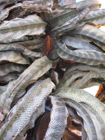 Medicinal snake skins