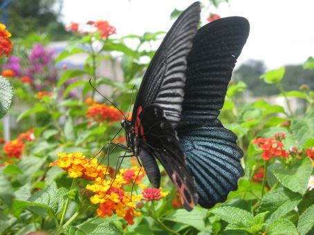 Beautiful border butterflies...