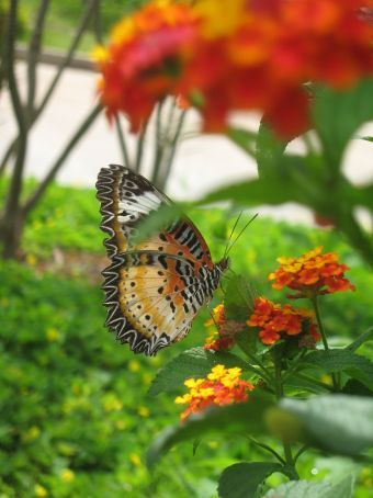 Beautiful border butterflies