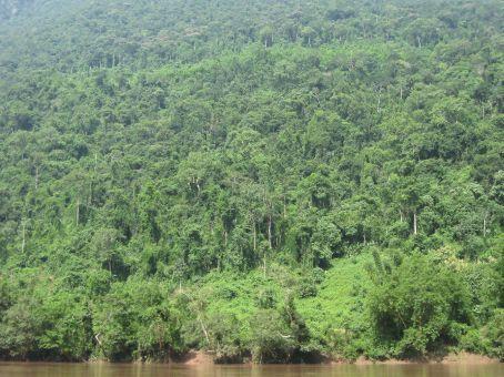Jungle on the Nam Ou