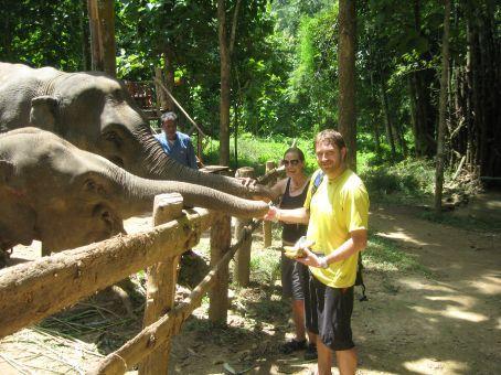 Feeding the elephants some bananas