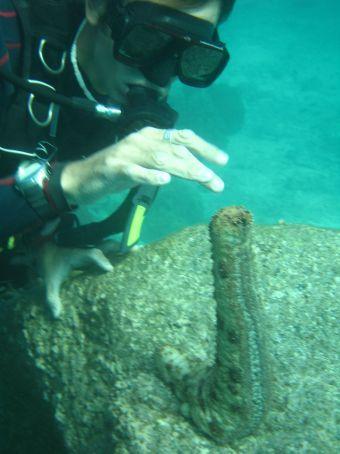 Andy playing with a big sea slug