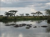 Hippos, we swear: by theunit, Views[263]