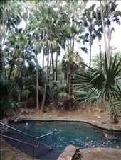 Mataranka Thermal Pool: by thewoodies, Views[89]