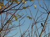 A kingfisher in the caravan park.: by thewoodies, Views[164]