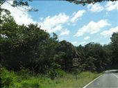 Tropical roadside growth.: by thewoodies, Views[94]