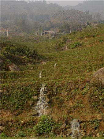 More terraced fields of Sapa.