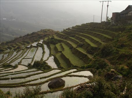 Terraced fields of Sapa in the late afternoon.