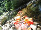 Samsung NV20 camera F/2.8, 1/250 sec, iso-80, 7mm focal length: by thirrin, Views[65]