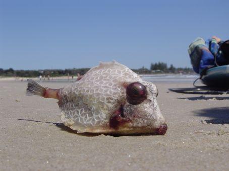 Die interessantesten Tiere werden an den Strand gespuelt.