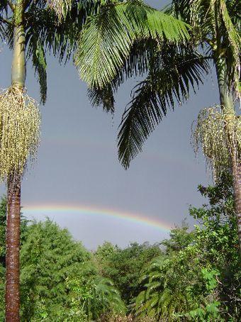 Fast zu schoen - Ein Regenbogen ueber Palmen nach einem mittelschweren Regensturm.