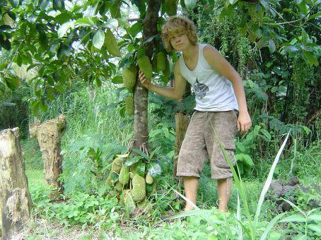 Am Cempedak-Baum von Pangaia.