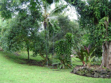 Saftige gruene Wiesen durchsetzt von Obstbaeumen ... Die Gegend um die Papaya Farms Rd glich einem Paradies.