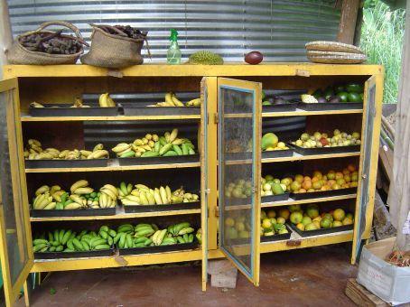 Supermarkt der Traeume: Der Fruchtstand auf dem Gelaende von Pangaia.