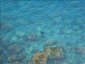 Manta ray, FI: by thomasz, Views[148]