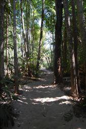 Walking through tropical rainforest, Litchfield NP: by thomasz, Views[86]