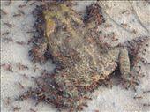 Ants at work, Kakadu NP: by thomasz, Views[85]