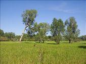 Soul soothingly silent, Yellow Water Billabong, Kakadu NP: by thomasz, Views[159]
