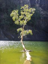 Tree in the water, Gunlom, Kakadu NP: by thomasz, Views[146]