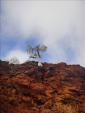 Defying gravity, Dales Gorge, Karijini NP, WA: by thomasz, Views[61]