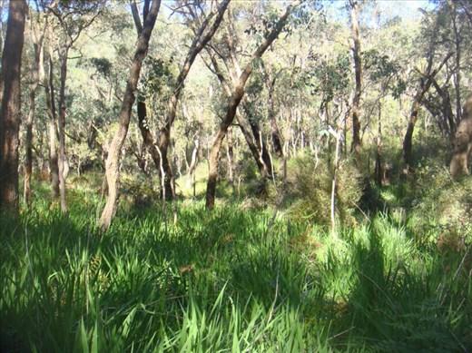 Green, Serpentine NP, WA