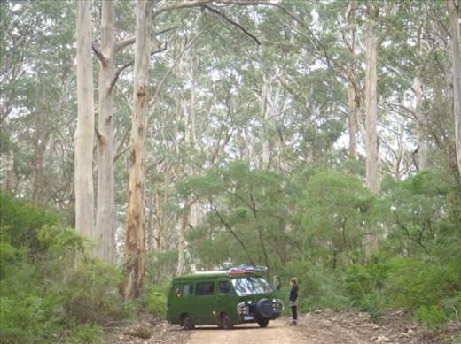 My sis, the grass-van and tall Karri trees, Leeuwin-Naturaliste NP, WA