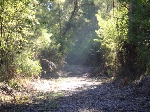 Beam of sunshine, Warren NP, WA