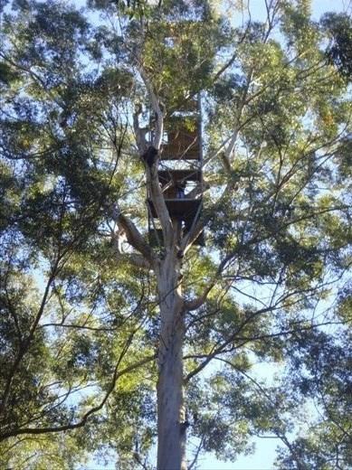 Old fire lookout, Bicentennial Tree (75m above ground), Warren NP, WA