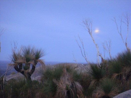 Grass trees and the moon, Mt. Chudalup, D'Entrecasteaux NP, WA