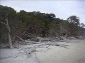 Dead wood, Hamersley inlet, Fitzgerald NP, WA: by thomasz, Views[54]