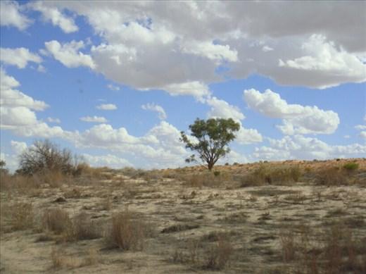 Lone tree, Walkers Crossing Track, SA