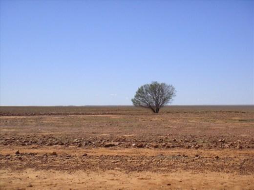 Non-conformist bush, Sturt Stony Desert, QLD