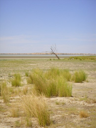 Looking for water in Coongie Lake, Innamincka Regional Reserve, SA