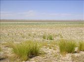 A bit of green, Coongie Lake, Innamincka Regional Reserve, SA: by thomasz, Views[76]