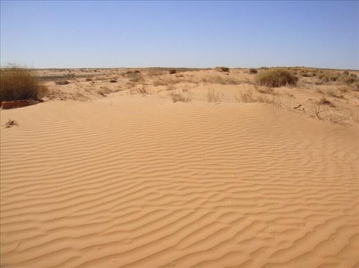 Ripples in the sand, Innamincka Regional Reserve, SA