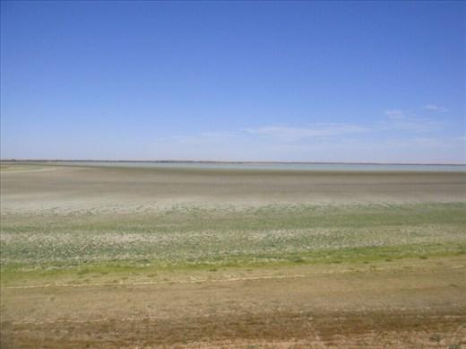 Green edge of Coongie Lake, Innamincka Regional Reserve, SA