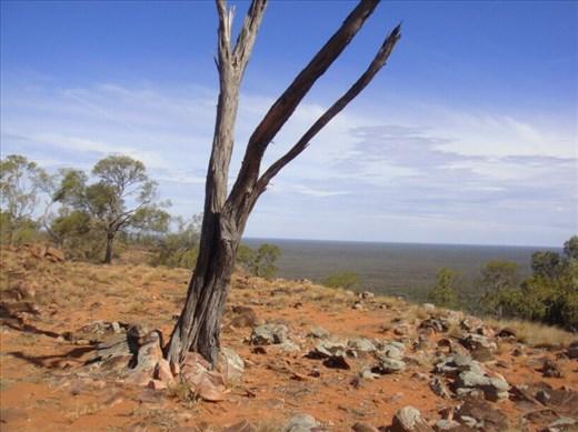 Dead wood, Mount Oxley, Bourke, NSW.