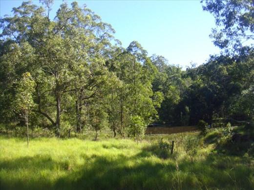 In the paddock, Kimbriki, NSW.