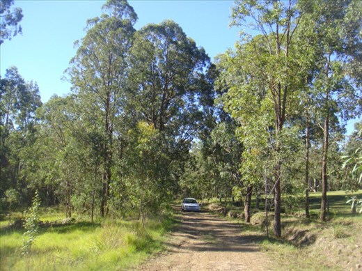 On the driveway, Kimbriki, NSW.