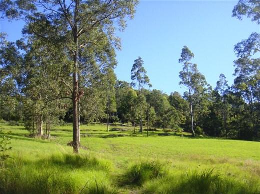 Green pastures, Kimbriki, NSW.