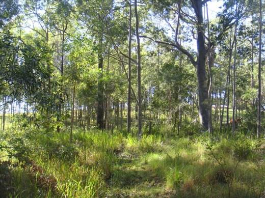 Path in the bush, Kimbriki, NSW.
