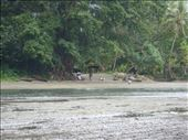 Figuring out how to cross the lagoon, Southwest Bay, Malekula.: by thomasz, Views[55]