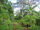 Main road, Lombaha, Ambae.: by thomasz, Views[52]