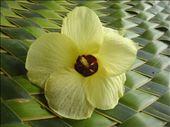 Flower on mat, Lombaha, Ambae.: by thomasz, Views[96]