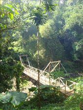 Newly constructed bridge, Lombaha, Ambae.: by thomasz, Views[45]